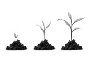 Tips for Growing a Professional Firm